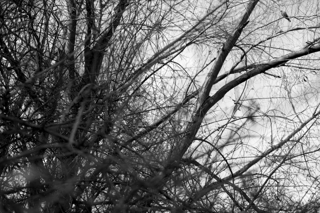 wo ist der vogelIMG_0757_1